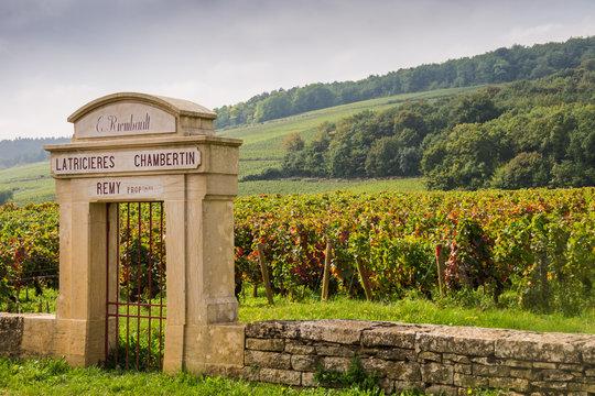 Chambertin vineyard, Gevrey-Chambertin, Burgundy, France