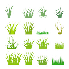 Fragment of a green grass. Vector illustration, isolated on a white.