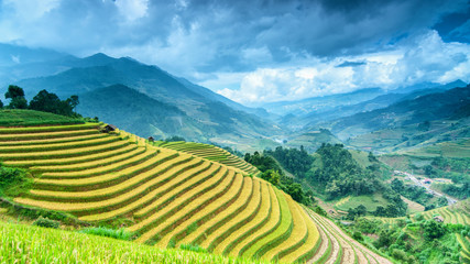 Acrylic Prints Rice fields Rice field on terrace Mu Cang Chai Yen Bai,Vietnam