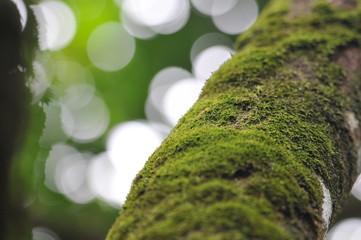 Green moss on the tree, defocused bokeh background