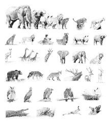 Collection animals. Sketch with pencil