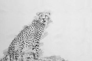 Cheetah. Sketch with pencil