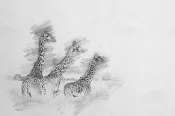 Giraffe. Sketch with pencil