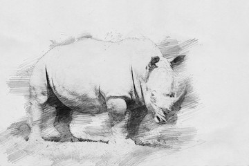 Rhino. Sketch with pencil