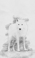 Wolf. Sketch with pencil