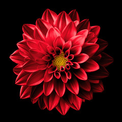 Cadres-photo bureau Dahlia Surreal dark chrome red flower dahlia macro isolated on black