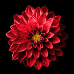 Poster Dahlia Surreal dark chrome red flower dahlia macro isolated on black