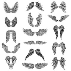 Wings graphic illustration