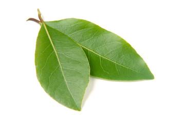 Fresh laurel leaf isolated on white background