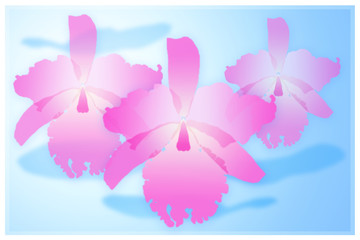 Pink cattleya orchid isolated on blue