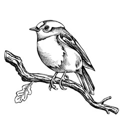 The image of the bird Bullfinch on the branch. Vector illustration.