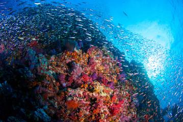Spoed Foto op Canvas Koraalriffen School of Fish over Coral Reef in Similan island, Thailand, Scuba diving Underwater seascape concept.