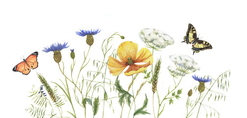 Watercolor banner with wildflowers. Set of summer meadow plants and flowers on the white background wits batterflies.