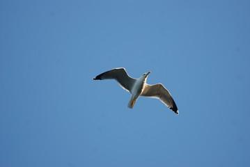 Birdwatching in Sardegna