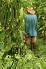 Malagasy farmer
