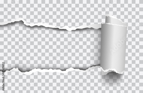 vector realistic torn paper with rollled edge on transparent