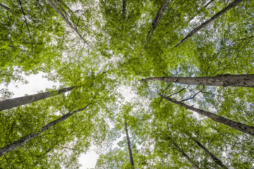 arboleda / grove