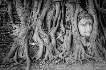 Head of a buddha statue tangled in the roots of a tree at Wat Mahathat, Thailand