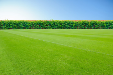 Aluminium Prints Grass grass field background