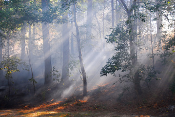 sunlight through fog and trees in the woods Wall mural