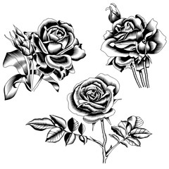 Set of black graphic roses, isolated on white background. Vector.