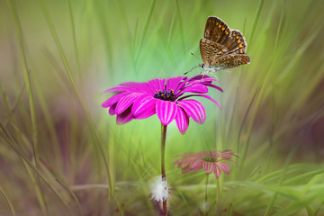 Summer landscape. Butterfly on purple flower on a delicate green background blur