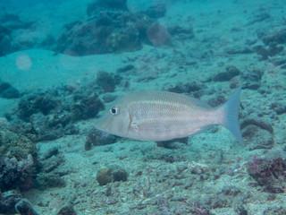 white fish swimming at underwater