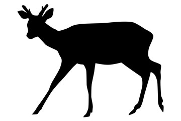 Sika deer with horns. Black silhouette