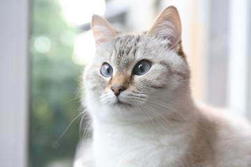 Domestic Cat Portrait