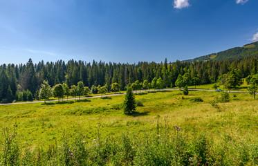 road through hillside medow near forest