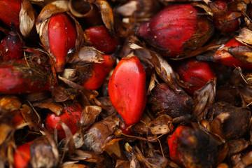 palm fruit  and seed- detal
