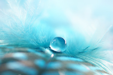 Transparent drop of water on a fluffy blue feather on a soft fuzzy background macro with soft focus. Light airy soft artistic image.