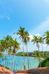 Palm trees on tropical coast over lagoon