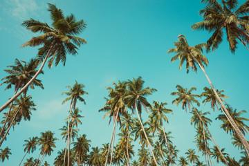Palms vintage filtered