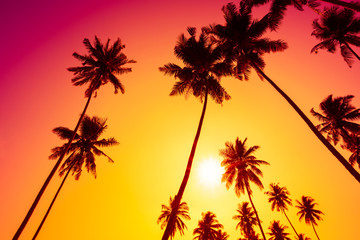 Palm trees at vivid tropical beach sunset