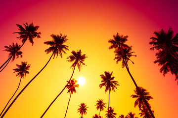 Sunset on tropical island beach with palm trees silhouettes
