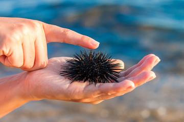 Sea urchin in woman's hand