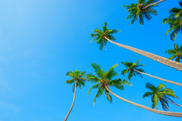 Tropical coconut palm trees hanging over blue sky background with copy space