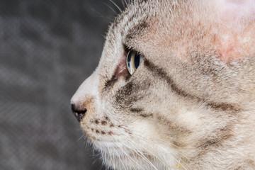 Close up cat photos