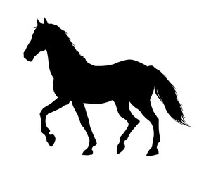 Running horse black silhouette. Vector illustration.