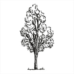 Tree sketch on white background. vector illustration. Hand-drawing isolated