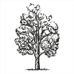 Large sketch tree on a white background. vector illustration. Hand-drawing isolated