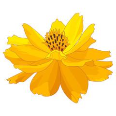 Cartoon marigold flower design