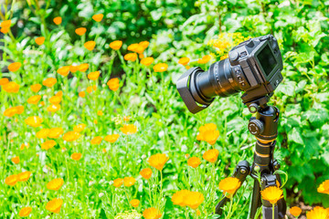 Macro photography in nature. The flowers and plants. Green blurred background.