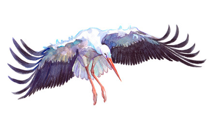 Watercolor single stork animal isolated on a white background illustration.