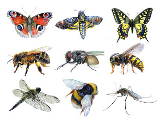 Watercolor set of insect animals wasp, moth, mosquito, Machaon, fly, dragonfly, bumblebee, bee, butterfly isolated on a white background illustration