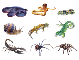 Watercolor set of animals tarantula, Spider, caterpillar, lizard,  gecko, Scorpio, snail, cobra snake isolated on white background.