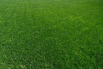 Texture of a fresh green grass
