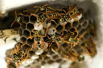 Le nid d'une famille de guêpes