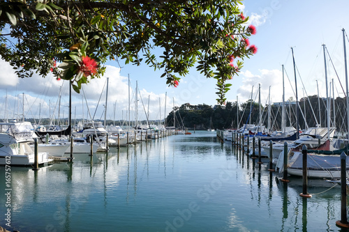 Boats moored at Whangarei Marina in the town basin